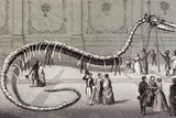 1851 Hydrarchos Whale Fake Monster Fossil Posters by Paul Stewart