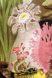 1854 Philip Gosse Colour Litho of Anemone Print by Paul Stewart