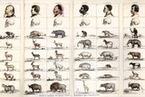 1854 Agassiz Human Origins Not Shared Prints by Paul Stewart
