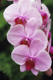 Orchid Flowers Photographic Print by Duncan Smith