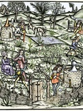 15th Century Herb Garden, Artwork Posters by Sheila Terry