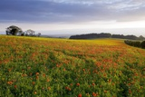 Wildflower Meadow Photographic Print by Bob Gibbons