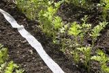 Carrots And Seed Tape Reprodukcja zdjęcia autor Sheila Terry
