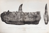 1824 Buckland's Megalosaurus Jaw No Tint Photo by Paul Stewart