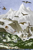 Flight Height of Birds, Historical Art Posters par Sheila Terry