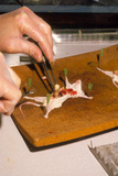 Biology Lesson: Gloved Hands Dissecting a Mouse Prints by Sinclair Stammers