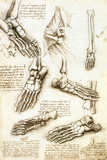 Foot Anatomy by Leonardo Da Vinci Print by Sheila Terry