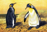 King Penguins Photographic Print by Sheila Terry
