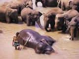Indian Elephant Bathing Photographic Print by Bjorn Svensson