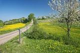 Country Lane Fotografisk tryk af Bjorn Svensson