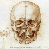 Skull Anatomy by Leonardo Da Vinci Premium Photographic Print by Sheila Terry