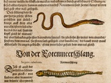 1558 Gessner Baby Sea Serpent Or Eel Kunstdruck von Paul Stewart