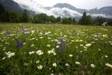 Hay Meadow In Slovenia Photographic Print by Bob Gibbons