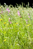Wild Meadow Flowers And Grasses Photographic Print by Jon Stokes