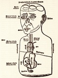 Internal Anatomy, 15th Century Diagram Photographic Print by Sheila Terry