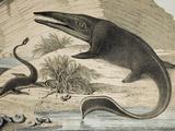1862 Hawkin's Icthyosaur & Plesiosaur. Photographic Print by Paul Stewart