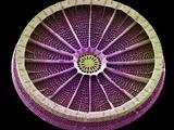Diatom, SEM Photographic Print by Steve Gschmeissner
