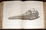 1814 Mary Anning First Ichthyosaur Skull Photographic Print by Paul Stewart