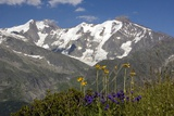 Arnica Montana And Mont Blanc Photographic Print by Bob Gibbons