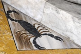 Scorpio, the Scorpion Photographic Print by Sheila Terry