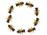 Bees In a Circle Photographic Print by Sigrid Gombert