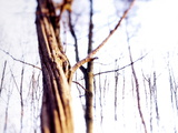 Woodland In Winter Photographic Print by Neal Grundy
