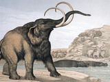 1862 British Mammoth with Carnivores Photographic Print by Paul Stewart