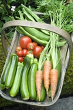 Home-grown Organic Vegetables Photographic Print by Sheila Terry