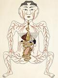 Pregnancy Anatomy, 15th Century Artwork Fotodruck von Sheila Terry