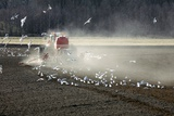 Sowing Crops, Sweden Photographic Print by Bjorn Svensson