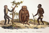 1824 Schinz Apes, Gibbon, Orang, Chimp Posters by Paul Stewart