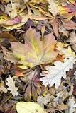 Autumn Leaves Photographic Print by Jon Stokes