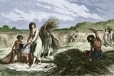 Early Humans Harvesting Crops Posters by Sheila Terry