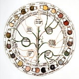 Medieval Urine Wheel Fotodruck von Sheila Terry