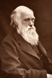 1874 Charles Darwin Picture by Leonard. Photographic Print by Paul Stewart