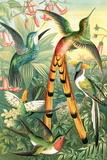 Hummingbirds, Historical Artwork Reproduction photographique par Sheila Terry