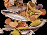 Diatoms, SEM Photographic Print by Steve Gschmeissner