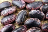 Bean Seeds (Phaseolus Sp.) Posters by Johnny Greig