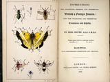 1827, 1839, Collecting British Insects Posters by Paul Stewart