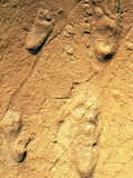 Fossilised Hominid Footprints From Laetoli Photographic Print by Sinclair Stammers
