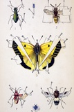 19th Century Insect Setting Board Photographic Print by Paul Stewart