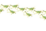 Grasshoppers Photographic Print by Sigrid Gombert