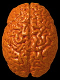 Child's Brain, 3-D MRI Scan Photographic Print by Arthur Toga