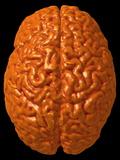 Child's Brain, 3-D MRI Scan Photographic Print by Arthur Toga
