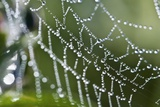 Dew Drops on a Spider's Web Posters