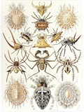 Arachnid Organisms, Artwork Photographic Print