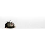Household Rat, Artwork Photographic Print