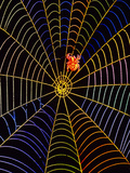 Coloured Image of Web And Garden Spider, Araneus Photographic Print
