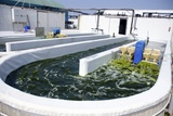 Growing Algae for Fish Food Prints