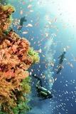 Coral Reef Red Sea, Ras Mohammed Kunstdrucke